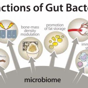 gut health